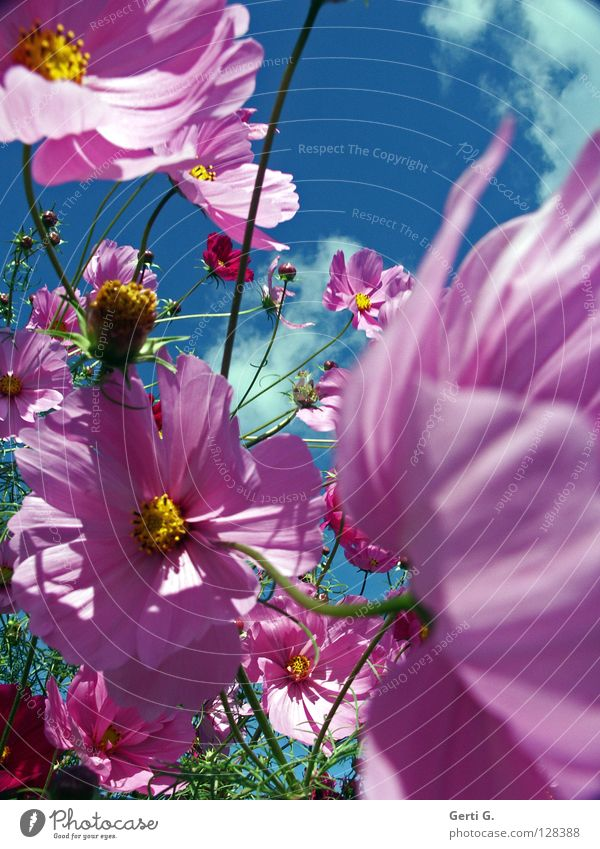 Beautiful Sky Flower Green Yellow Blossom Movement Spring Pink Wind Fresh Happiness Multiple Jewellery Many Bud