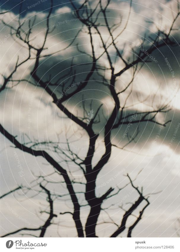 cloud/\tree Tree Clouds Dark Spring White Gray Round Sunday Sky Blue flocculated branched tall Loneliness Mountain