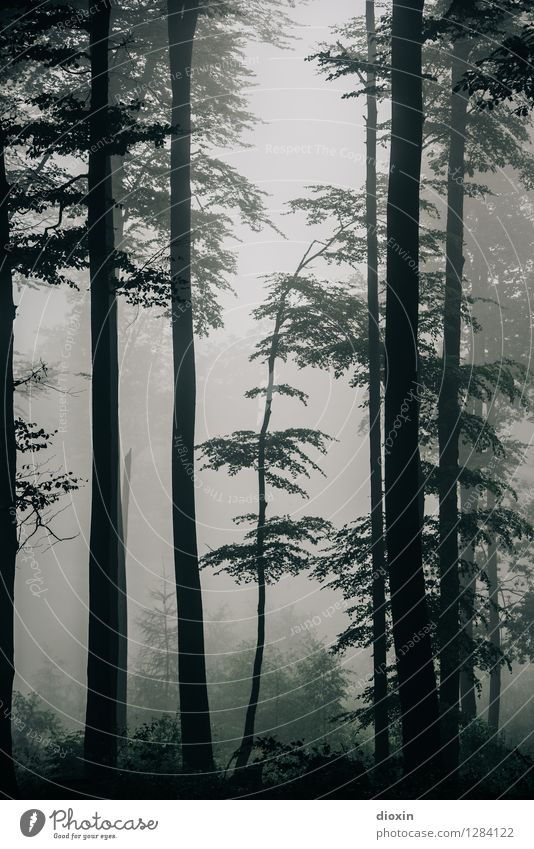 After Rainforest [8] Trip Hiking Environment Nature Plant Autumn Climate Fog Tree Forest Virgin forest Palatinate forest Growth Wet Natural Damp Dank