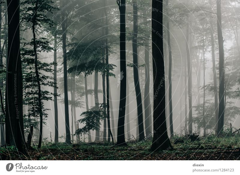 Nature Plant Tree Landscape Calm Forest Environment Autumn Natural Rain Weather Fog Growth Hiking Trip Climate