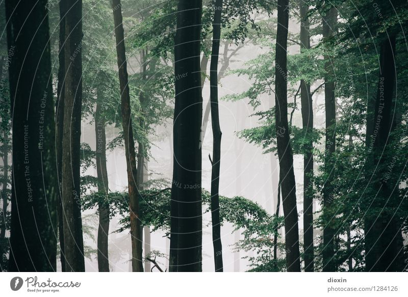 After Rainforest [5] Trip Hiking Environment Nature Plant Fog Tree Forest Virgin forest Palatinate forest Growth Fresh Natural Damp Colour photo Exterior shot
