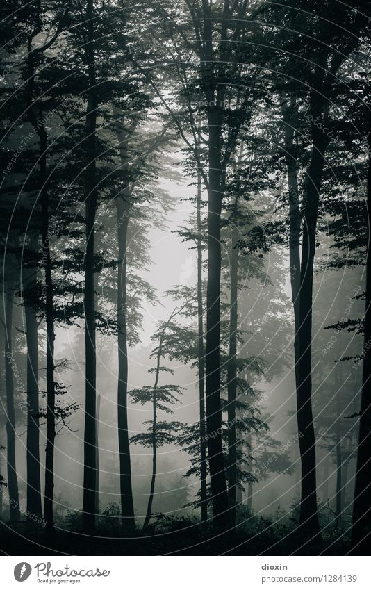 After Rainforest [6] Trip Hiking Environment Nature Landscape Plant Weather Fog Tree Forest Virgin forest Palatinate forest Growth Wet Natural Damp Humidity