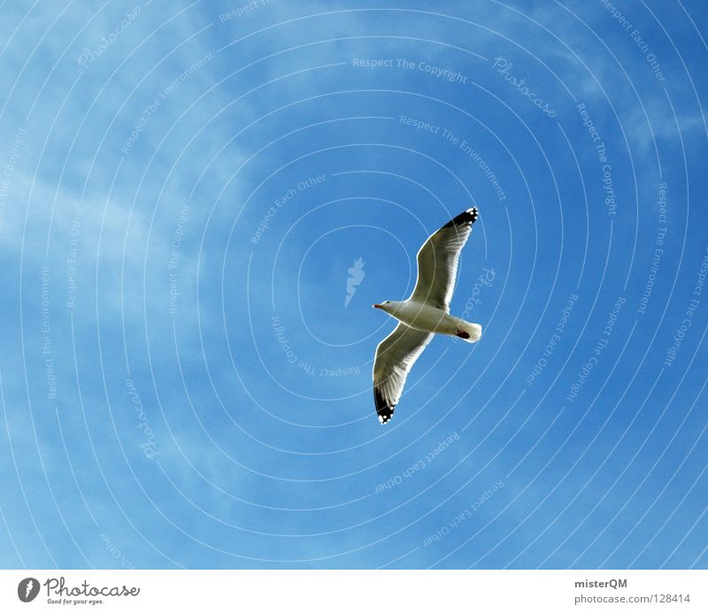 If I were a little bird... Seagull Bird Ocean Clouds Beach Vacation & Travel Air Lake Silvery gull Allegory Art Far-off places Sky Beak Wing Body of water
