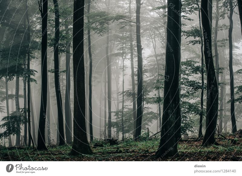 Nature Plant Tree Landscape Forest Environment Natural Rain Weather Fog Growth Hiking Trip Climate Wet Virgin forest