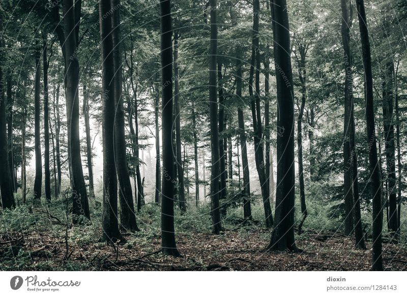 After Rainforest [18] Environment Nature Landscape Plant Autumn Weather Fog Tree Wild plant Forest Virgin forest Palatinate forest Growth Wet Natural