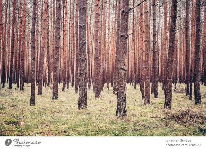 woodland Environment Nature Landscape Plant Tree Forest Exterior shot Bleak Coniferous forest Mecklenburg-Western Pomerania Hiking Many Full Vista Equal Growth