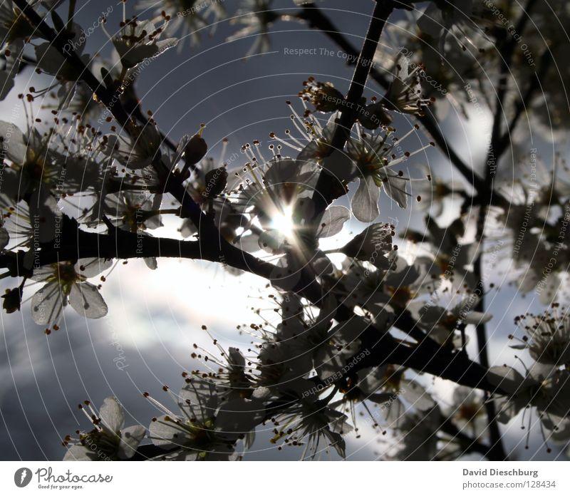 Sky Summer Sun Tree Flower Joy Dark Black Warmth Lighting Spring Blossom Bright Energy industry Fruit Growth