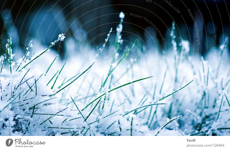 White Green Blue Winter Cold Snow Meadow Grass Ice Frost Lawn Frozen Blade of grass Ice crystal Snowflake