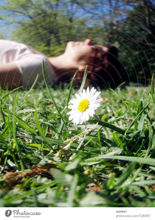 Woman Flower Green Summer Calm Relaxation Grass Freedom Break Daisy Juicy