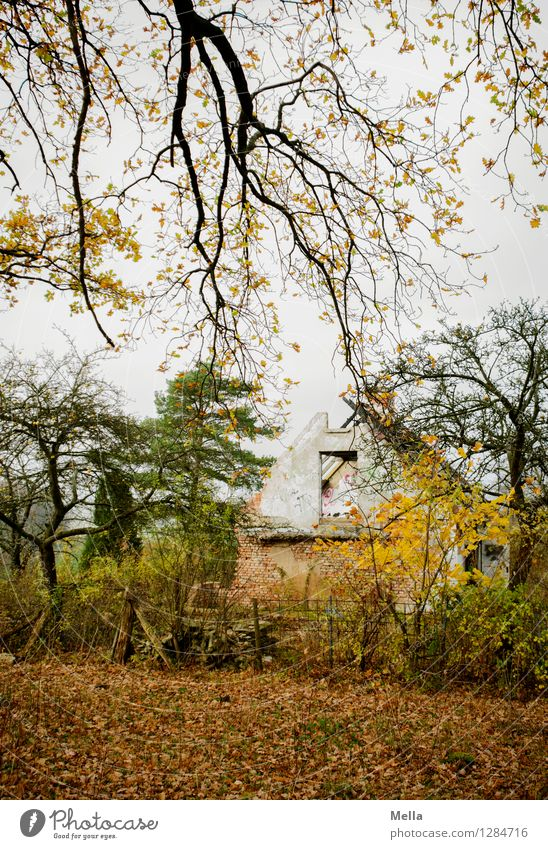 Old Tree Loneliness Landscape House (Residential Structure) Forest Environment Senior citizen Autumn Building Moody Living or residing Gloomy Branch Transience
