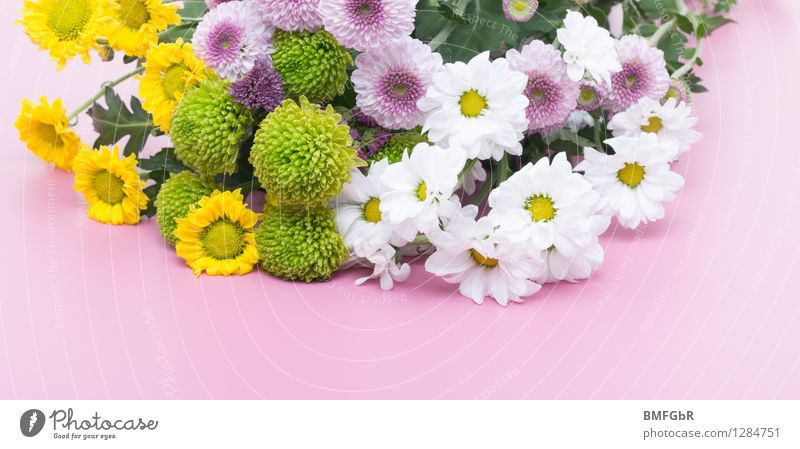Plant Green Beautiful White Flower Joy Yellow Life Blossom Natural Happy Pink Contentment Fresh Decoration Authentic