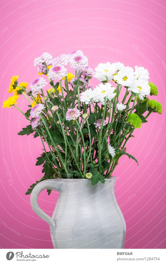 Plant Green White Flower Leaf Yellow Love Blossom Happy Pink Flat (apartment) Contentment Fresh Decoration Happiness Esthetic