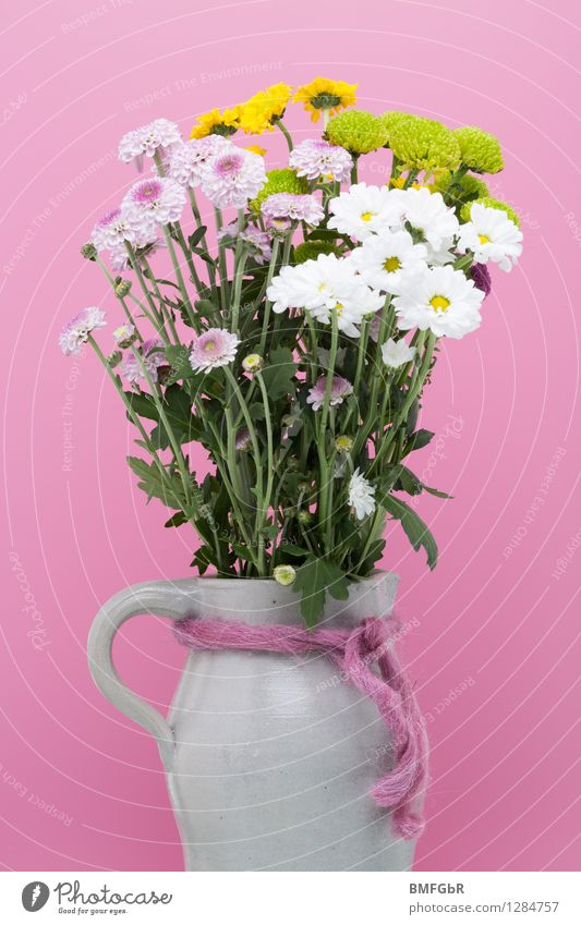 Colored filled jug Living or residing Flat (apartment) Decoration Spring Plant Flower Leaf Blossom Dahlia Marguerite Bouquet Bow Water jug stone jug Stone