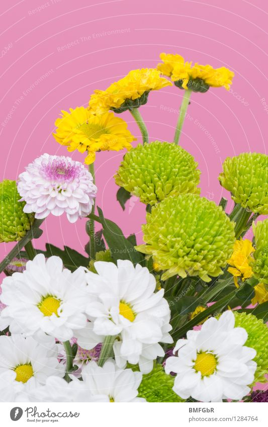flower power Fragrance Florist Floristry Plant Flower Blossom Dahlia Marguerite Bouquet Friendliness Happiness Fresh Hip & trendy Beautiful Multicoloured Yellow