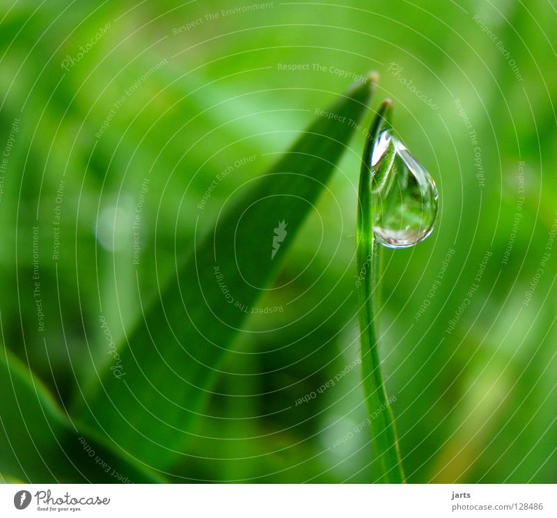 Water Green Meadow Grass Rain Drops of water Wet Rope