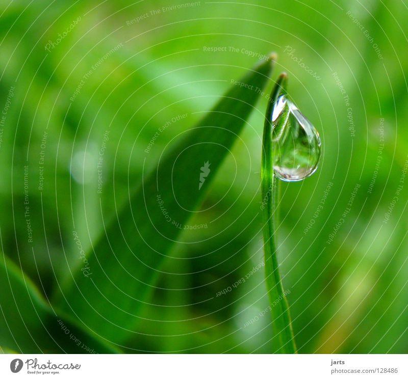 Water Green Meadow Grass Rain Drops of water Wet Rope
