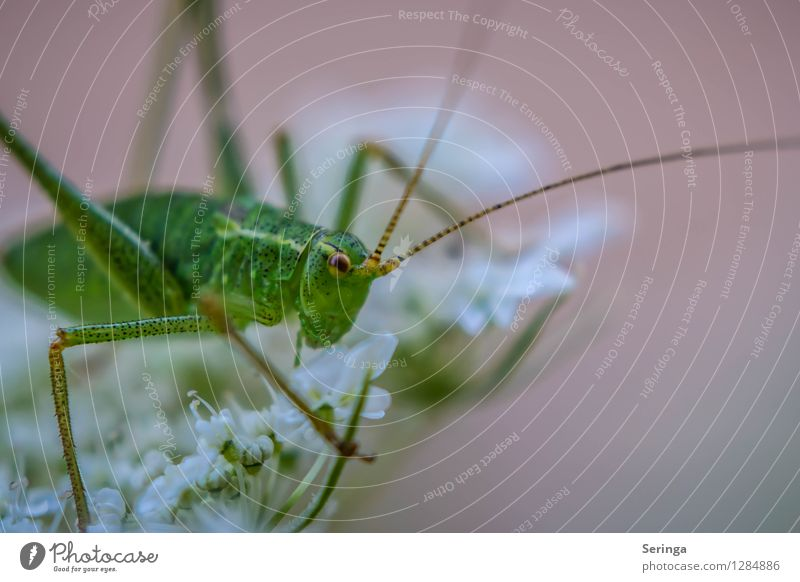 Nature Plant Flower Landscape Animal Forest Environment Meadow Grass Garden Jump Park Field Bushes Crawl Locust