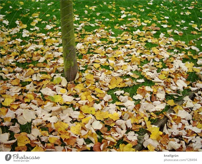 Last autumn Leaf Grass Meadow Tree Tree trunk Yellow Brown Green Autumn Transience fallen