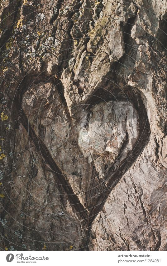 Heart on the tree Leisure and hobbies Decoration Valentine's Day Partner Environment Nature Spring Tree Forest Wood Sign Love Natural Brown Gray