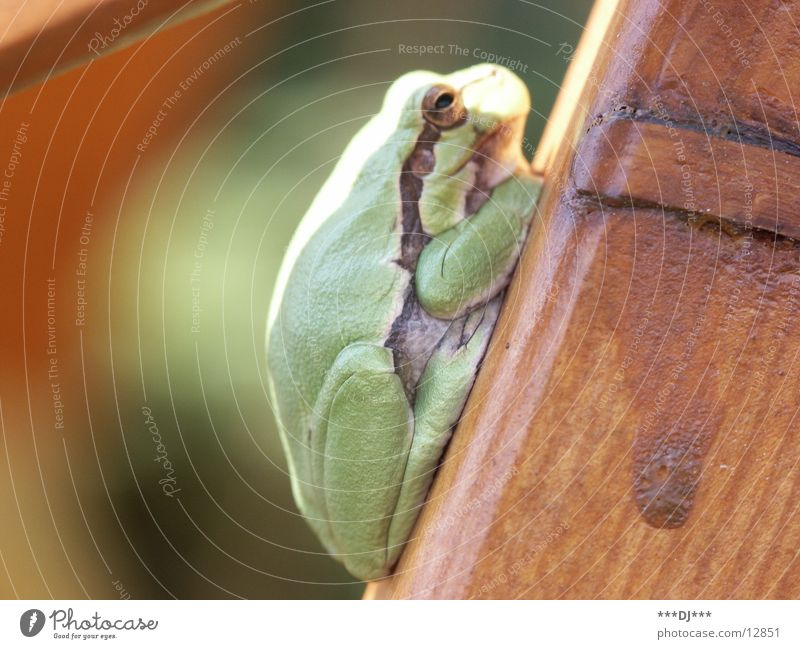 Nature Sun Green Animal Relaxation Wood Transport Sit Frog Amphibian