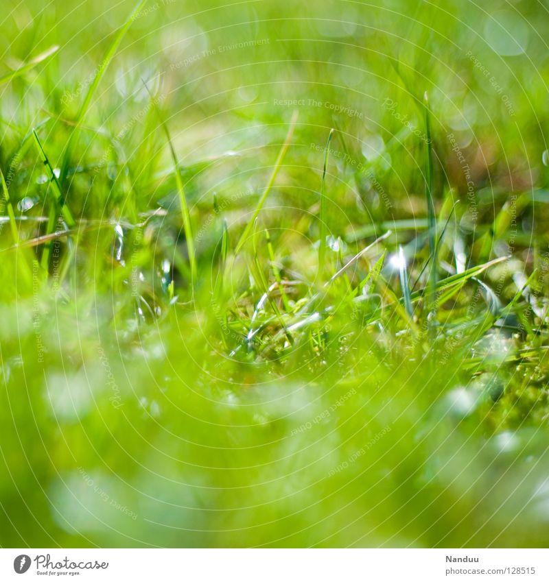 Green Summer Life Relaxation Meadow Spring Fresh Growth Depth of field Cuddly Nest Flourish Crunchy Easter egg nest Maximum aperture