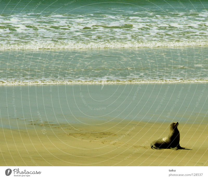 Water Ocean Beach Animal Waves Speed Dangerous Bay Fishing (Angle) New Zealand Go crazy South Island