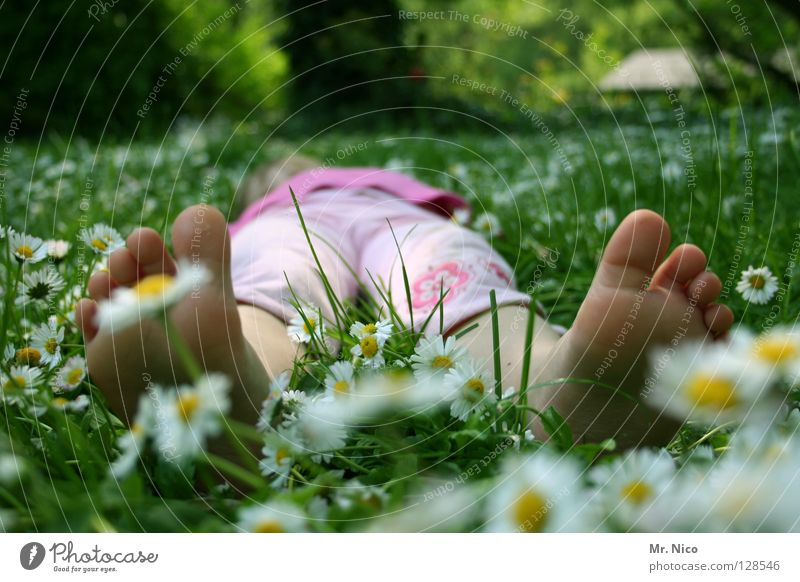 chill Relaxation Calm Summer girl feet spring Warmth Meadow To enjoy Lie Yellow green Pink White Comfortable Peace Goof off Toes Daisy Summery Barefoot Physics