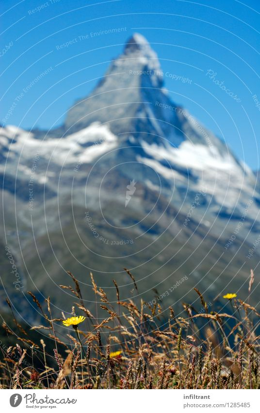 Mountain meadow on the Matterhorn Trip Far-off places Summer vacation Hiking Environment Nature Landscape Cloudless sky Beautiful weather Plant Flower Grass