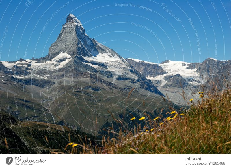 Mountain meadow at the Matterhorn II Trip Adventure Far-off places Expedition Summer vacation Hiking Nature Landscape Cloudless sky Beautiful weather Grass