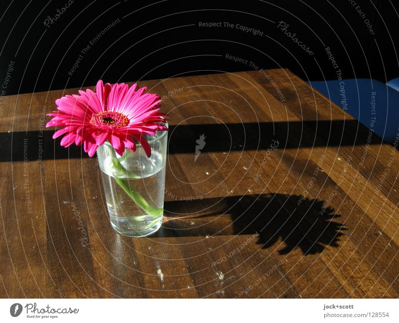 Floret (for Anja) Plant Beautiful Water Flower Calm Warmth Blossom Wood Happy Time Pink Arrangement Decoration Glass Beautiful weather Table
