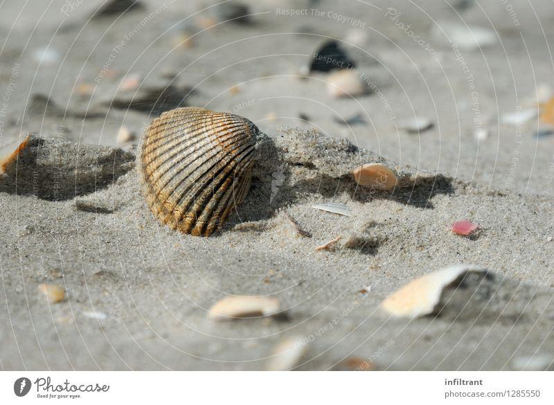 Nature Vacation & Travel Summer Relaxation Ocean Calm Beach Natural Coast Gray Brown Sand Orange Esthetic Island North Sea