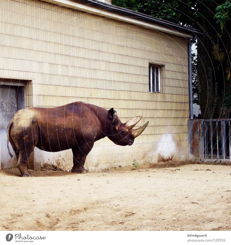 For Photocase ... Rhinoceros White rhinoceros Black rhinoceros Loneliness Zoo Wall (barrier) Savannah Ivory Avaricious Habitat Captured Grief Weapon