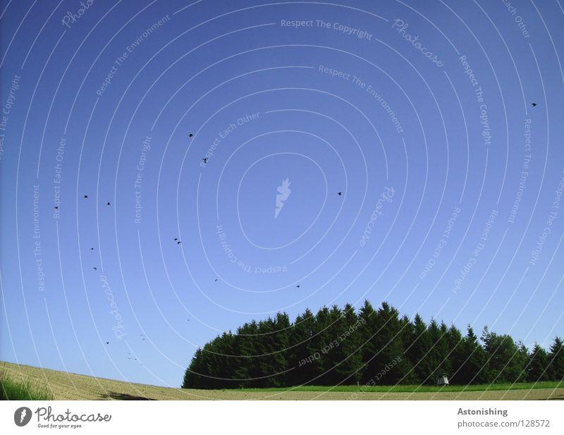 Sky Tree Green Blue Forest Meadow Bird Field Flying Many Flock Flock of birds Flight of the birds