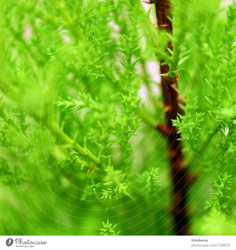 The green lung Lung Oxygen Fir tree Tree Green Wood flour Nature Park Growth Spring Environment Environmental protection Coniferous trees Forestry Tree nursery