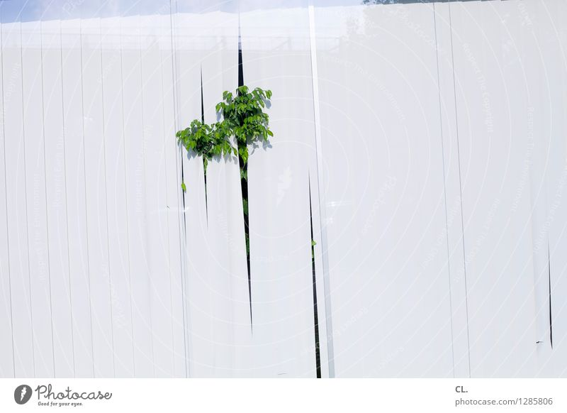 capitol insurance Plant Foliage plant Window Window pane Screening Slat blinds Growth Green White Whimsical Colour photo Deserted Copy Space right