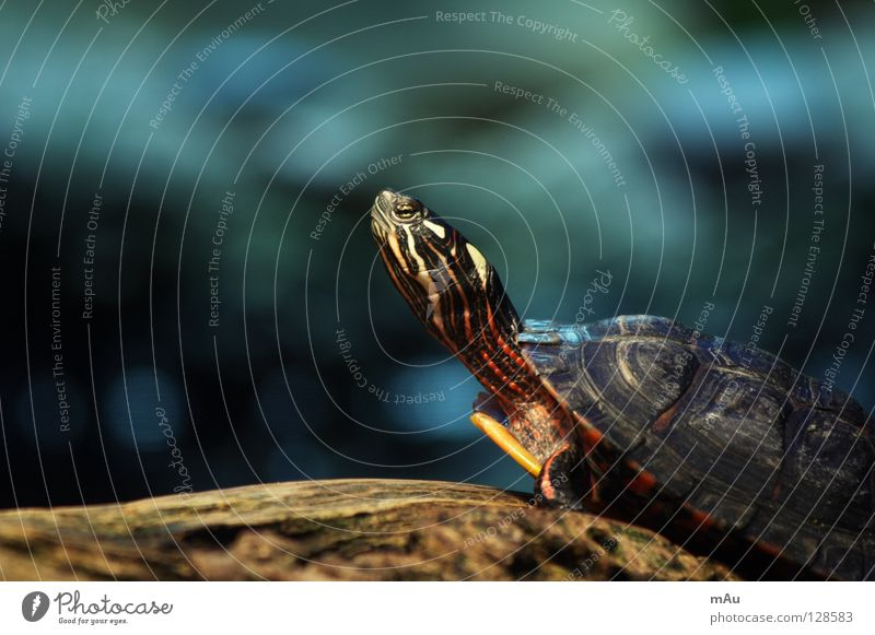 Nature Calm Contentment Branch Zoo Safety (feeling of) Hard Slowly Turtle Armor-plated