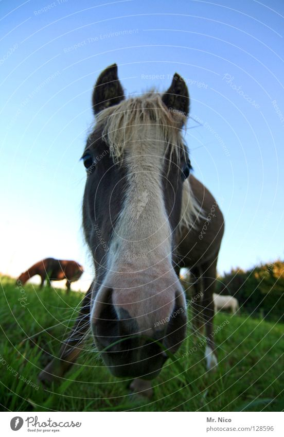 Sky Blue Green Animal Meadow Hair and hairstyles Grass Legs Brown Crazy Perspective Horse Ear Lawn Curiosity Near