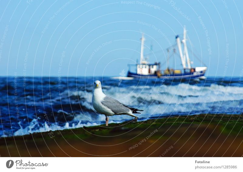 Under control Environment Nature Elements Water Sky Cloudless sky Summer Waves Coast North Sea Ocean Animal Bird 1 Near Wet Blue Watercraft Fishing boat