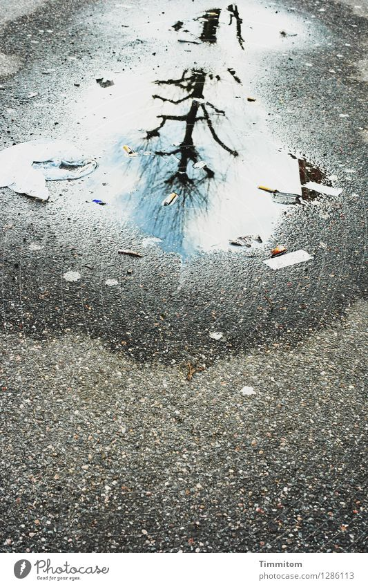 Karl cheers. Environment Sky Beautiful weather Street Water Esthetic Blue Gray Emotions Dirty Puddle Asphalt Reflection Tree Bleak Colour photo Exterior shot