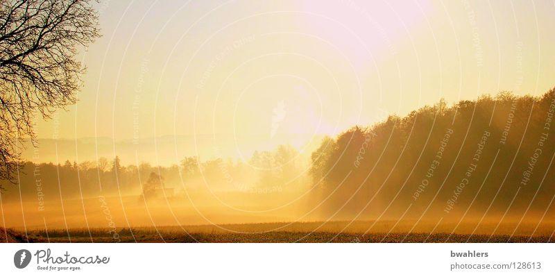 Sky Tree Sun Forest Autumn Meadow Landscape Moody Lighting Fog Morning Back-light Plant