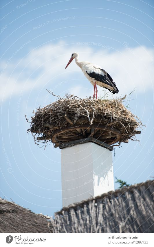 Stork in nest House (Residential Structure) Nature Sky Clouds Summer Beautiful weather Village Fishing village Roof Animal Wild animal Bird Poultry Feather 1