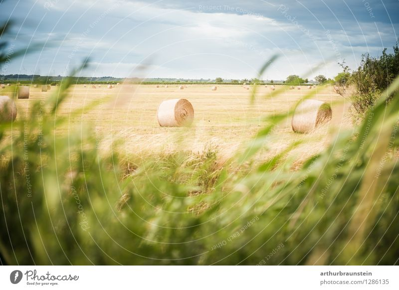 Bale of hay landscape in the wind Environment Nature Landscape Sky Clouds Summer Climate Beautiful weather Plant Grass Field Village Deserted Lie Stand
