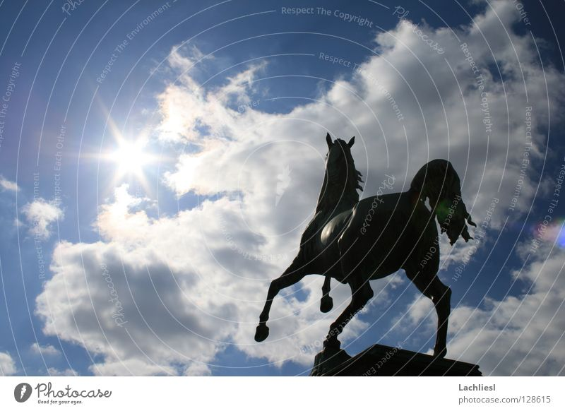 Sky Blue White Sun Clouds Animal Warmth Art Freedom Germany Elegant Speed Academic studies Soft Symbols and metaphors Horse