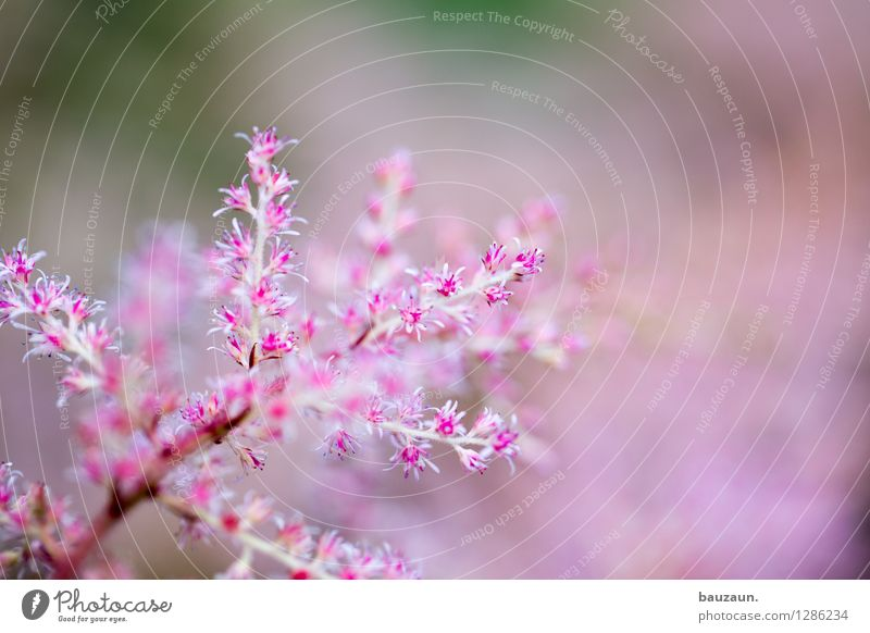 Nature Vacation & Travel Plant Beautiful Summer Relaxation Flower Calm Life Blossom Happy Garden Pink Park Contentment Fresh