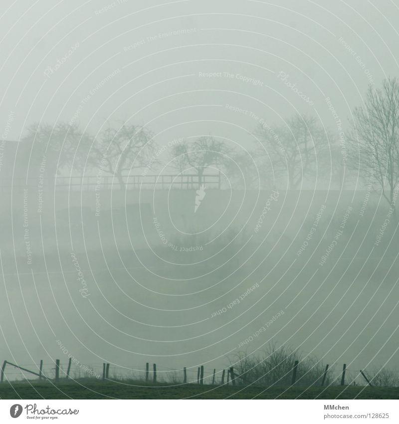 shadowy Fog Tree Bushes Fog bank Dark White Morning fog Vista Dew Hoar frost Cold Gloomy Bad weather Country life Weather Mystic Eifel Meadow Fence Foreground