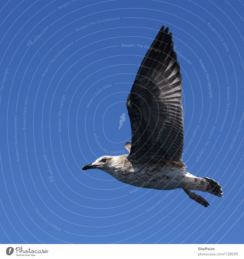 unattached Seagull Bird Vacation & Travel Air Free Flying Blue Sky