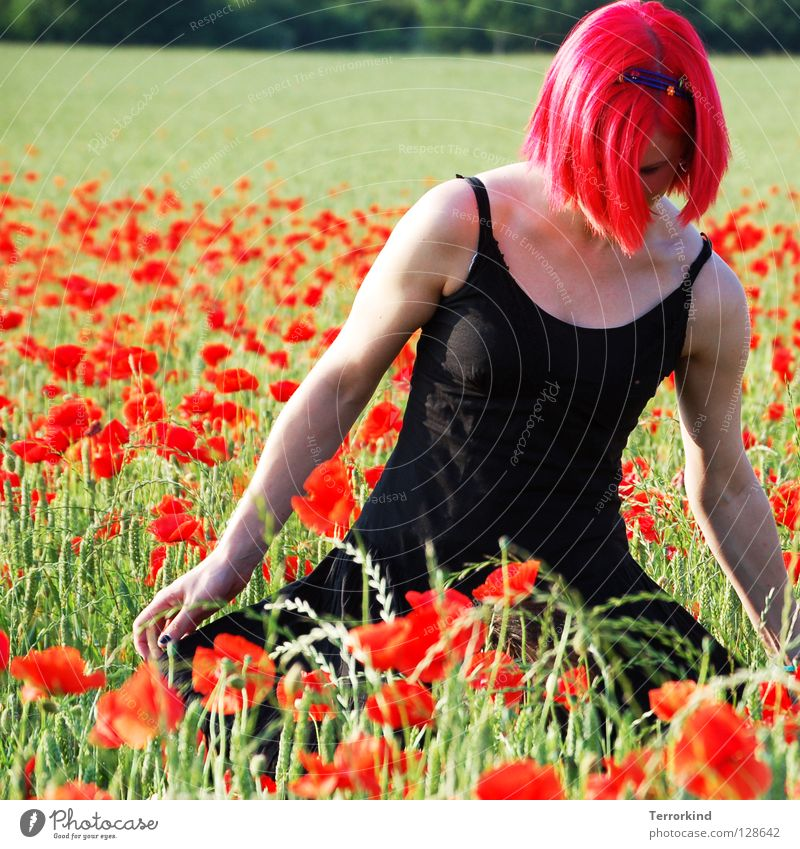 Slapping. Nice. Field Summer Hot Physics Degrees Celsius Going Dress Black Red White Radiation False Red-haired Poppy field To go for a walk Green Yellow Tree