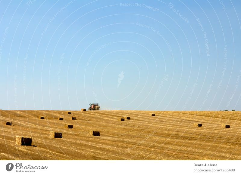 Form_completed Environment Nature Cloudless sky Summer Beautiful weather Agricultural crop Field Tractor Work and employment Esthetic Exceptional Blue Brown