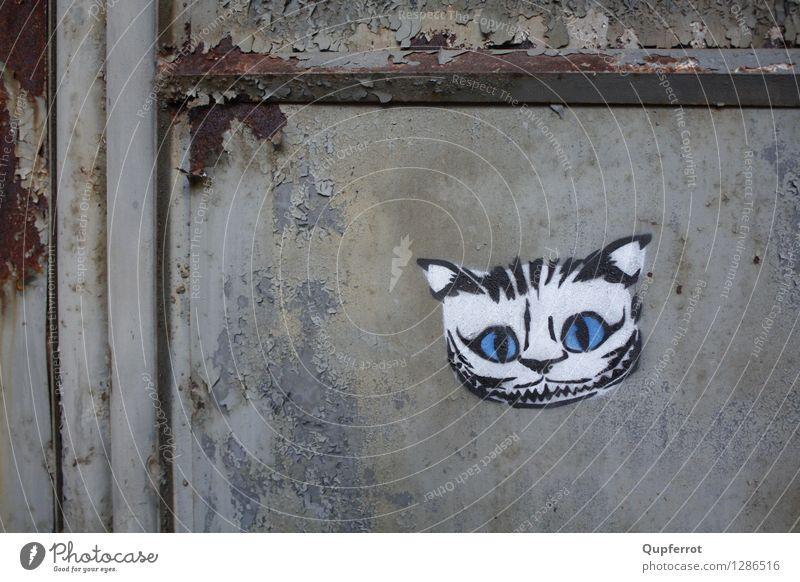 Cat City Blue White Dark Black Graffiti Building Art Wild Door Threat Anger Factory Rust Steel