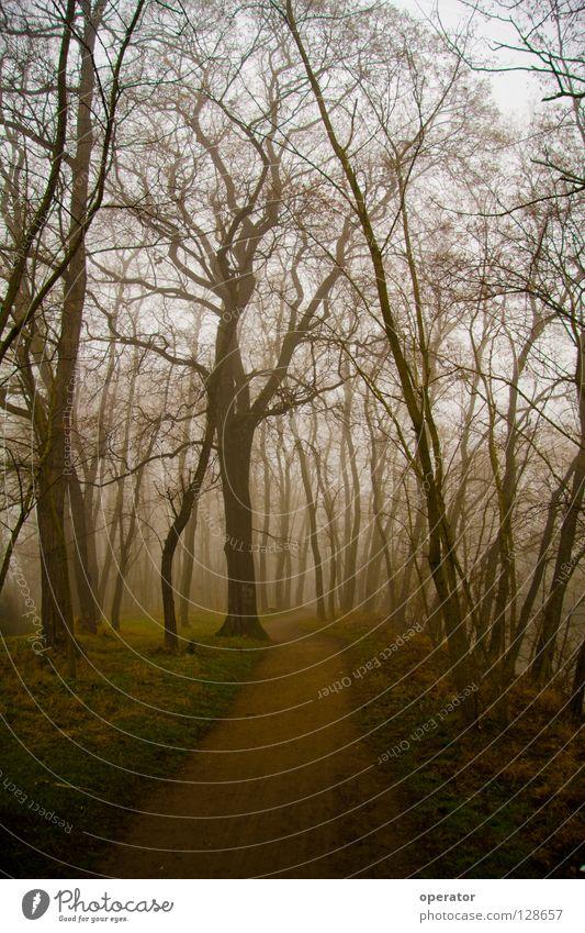 Tree Forest Autumn Lanes & trails Fog Branch Branchage Deciduous forest